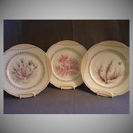 Set of 3 - Haviland & Co, Limoges Hand Painted Cabinet Plates w/Sea-life, Vegetation & Coral