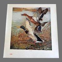 Our American Game Birds Portfolio of 18 Prints by Lynn Bogue Hunt - 1917 E. I. DuPont de Nemours & Co.