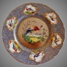 """Royal Doulton """"Bird of Paradise"""" Motif Plate (4 of 6) - E Percy/Robert Allen"""