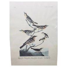 "JOHN J. AUDUBON (1785-1851)  Lithograph Print ""Drawn From Nature""  Birds"