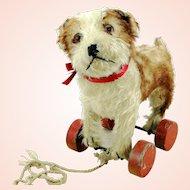 Steiff Molly dog puppy on eccentric wooden wheels, prewar ff button, red label, 1927 – 42 made