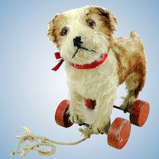 Steiff Molly puppy on eccentric wheels, prewar ff button, red label, 1927 – 42