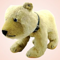 "Steiff polar bear, button, blue glass eyes, vintage 1952 to 61, largest 12"""
