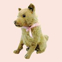 "Steiff dog Chow Chow prewar 1928 to 1931 only, large 14"" sitting"