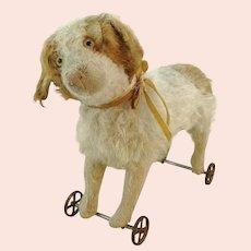 """Antique Steiff St Bernhard dog on metal wheels, 11"""", made 1905 to 1927"""