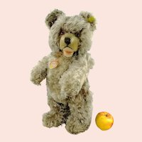 """Steiff Teddy Bear Zotty with all IDs 17"""" tall produced 1959 only in this edition"""