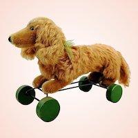 Steiff dachshund Waldi on eccentric wheels with IDs, 1966/67 vintage