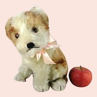 """Steiff puppy dog Molly with IDs US Zone Tag second largest 9"""" vintage 1949 to 1953 only"""