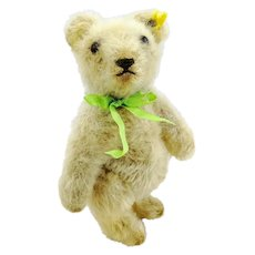 "White Steiff teddy bear with button, 1950s vintage, 6"" tall"