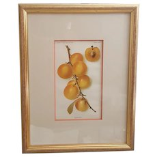 Golden Plum Yearbook U.S. Dept of Agriculture 1905 Plate LXII framed print