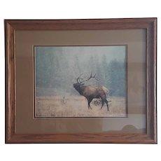 Denver Bryan 1989 limited edition signed Elk photo