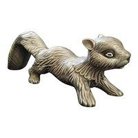 Grey Arners Squirrel