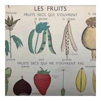 Dried Fruits (Les Fruits Secs) / Seeds (La Graine)