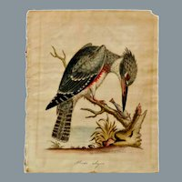 1749 George Edwards A Natural History of Uncommon Birds Alcedo Alcyon Hand-colored Engraving