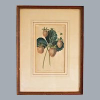 Antique Botanical Hand Colored Engraving Strawberries by A. Withers and J. Watts 1st Edition