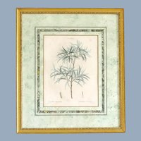 1801- 1819 REDOUTE, Pierre-Joseph Botanical Print Engraved by Gabriel