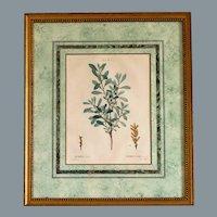 1801- 1819 REDOUTE, Pierre-Joseph - Engraved by Gabriel - Myrica Gale RARE