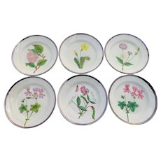 Set of Six Pearlware Botanical Plates Hand Painted Silver Lustre Rim Antique c 1810