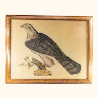 Lithograph Print of an Adult Goshawk by John Selby