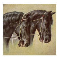 Unposted, German postcard of two black horses in snaffle bridles