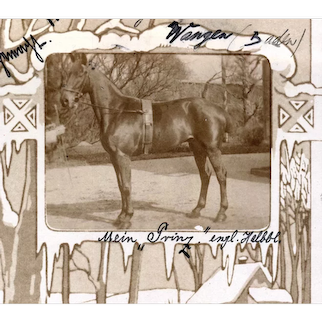 German, undivided back, real photo postcard of a horse in winter