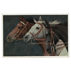 Unposted, German postcard of three horses neck and neck