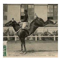 Unposted, real photo, French postcard of a horse performing the Croupade in dressage