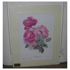 Hybrid Tea Rose Lithograph by Collingridges, Victorian