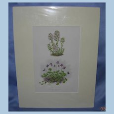 "Lithograph, ""Thymus Striatus and Erpetion Reniforme, Botanical lithographs, Victorian"
