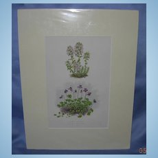 "Lithograph, ""Thymus Striatus and Erpetion Reniforme, Botanical lithographs, Victorian"