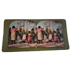 Stereo Viewer Card Natives Planting Rice, Philippine Village #316  1904 By  T. W. Ingersoll