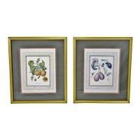 Vintage Framed French Fruit Botanical Langlois Prints - A Pair
