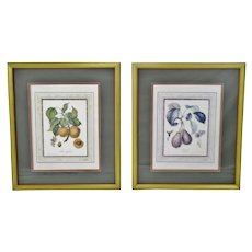 Vintage Framed French Fruit Botanical Langlois Prints - A Pair