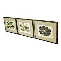 Antique Framed 1800's French L'illustration Horticole Botanical Prints - Set of 3