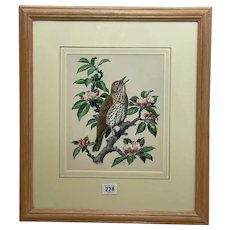 """Watercolour """"Chirping Song Thrush Bird"""" By Charles Frederick Tunnicliffe OBE RA"""