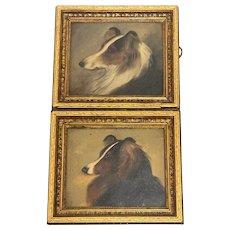 Pair 19th Century Oil Paintings Scottish Rough Collie Dog Portraits
