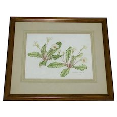 Fine Art Watercolour Wall Painting Plant Study Botanical Polyanthus Flowers
