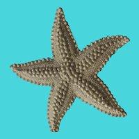 """Vintage Large 2.75"""" MONET Starfish Sea Star Brooch"""