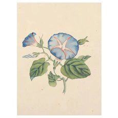 Collection of four watercolors by 19th century American artist Cora Shelton
