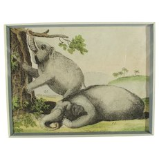 Handcolored Bookplate of Elephants 19th century