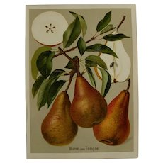 "Antique Pear Print - chromolithograph c1900 - ""Birne von Tongre"""