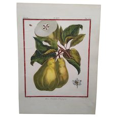 Antique Pear Print - Bon Chretien d'Espagne -  Hand-colored engraving 1768
