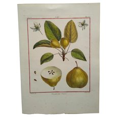 Antique Pear Print - Bergamotte Suisse -  Hand-colored engraving 1768