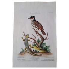 """Antique engraving George Edwards """"Uncommon Birds..."""" 1755   Lizard and Red-start"""