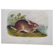 """Audubon """"Quadrupeds of North America"""" - SWAMP HARE- Plate 37 - Hand-colored litho - First octavo edition"""