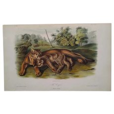 "Audubon ""Quadrupeds of North America"" -  THE COUGAR  - Plate 97 -  Hand-colored litho -First octavo edition"