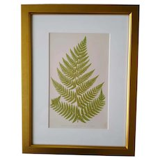 Framed antique fern print - English -1856
