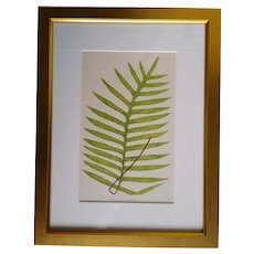 Framed antique fern print - English -1856