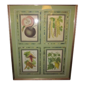 Set of 4 Hand-Colored Prints of Fruit