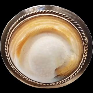 Beautiful Victorian 14k Shiva/Cat's Eye Shell Brooch